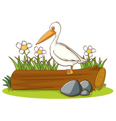 isolated picture pelican bird on log vector image
