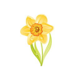Narcissus daffodil flower floral icon realistic vector