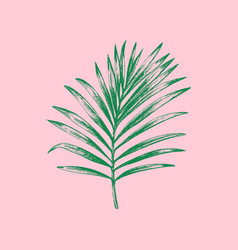 Palm leaf on pink background vector