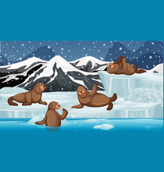 scene with many seals on ice vector image