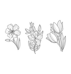 set of 3 sketchy ornamental flowers vector image