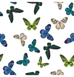 seamless pattern with tropical butterflies vector image vector image