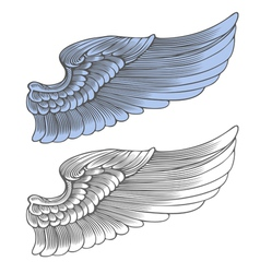 Wing in engraving style vector image vector image