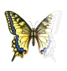 Butterfly Papillo Machaon vector
