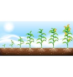 Corn growing from underground vector