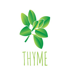 Green thyme leaf vector