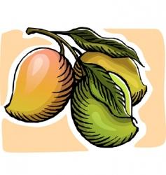 mangoes vector image