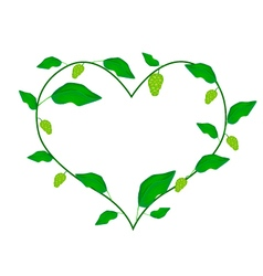 Noni Fruits and Leaves Forming in Heart Shape vector image