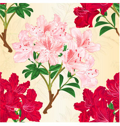 Seamless texture red and pink rhododendrons vector