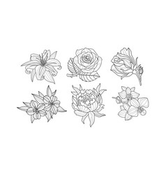 set beautiful hand drawn flowers vector image