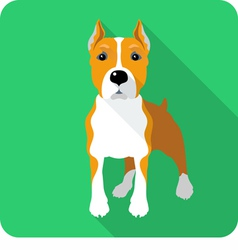 dog American Staffordshire Terrier standing icon f vector image
