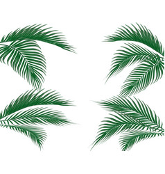 different in form tropical dark green palm leaves vector image vector image