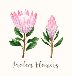 high detailed protea flower vector image