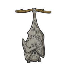 sleeping bat sketch vector image