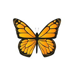 The butterfly with orange wings vector