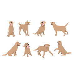 animal dog labrador character icon set in flat vector image