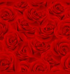 beautiful red rose - rosa seamless background vector image