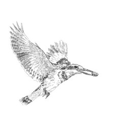 drawing of pired kingfiher flying while holding vector image