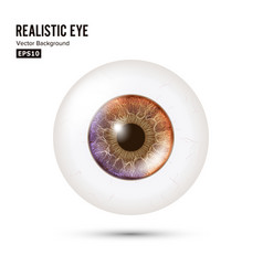 Photo realistic eyeball human retina vector