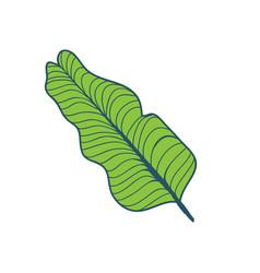 banana tree tropical leaf hand drawn vector image vector image