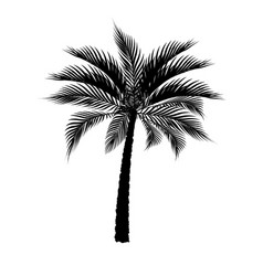 A tropical palm tree in black isolated on white vector