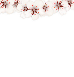 Blooming sakura flowers blossom isolated vector