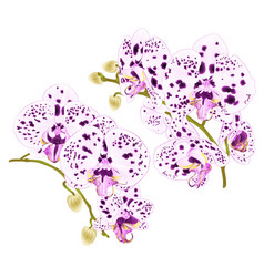 Branches orchids with dots purple and white vector