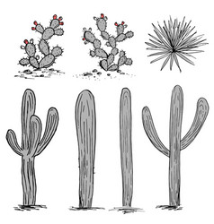 Cacti group prickly pear cactus blue agaves and vector