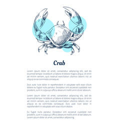 crab marine creature poster in sketch style with vector image