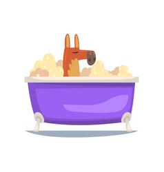 funny kangaroo taking bath funny animal cartoon vector image