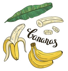 Hand drawing bananas fruit and leaves on a white vector
