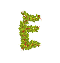 letter e english alphabet made of tree branches vector image
