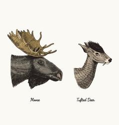Moose or eurasian elk tufted deer hand vector