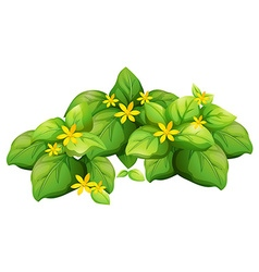 Plant with green leaves and yellow flower vector image