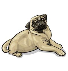 pug dog puppy vector image