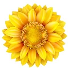 Sunflower high quality EPS 10 vector