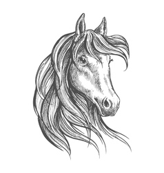 Arabian horse with long forelock sketch style vector
