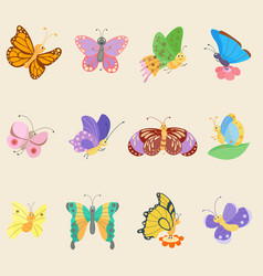Colorful butterfly insects flowing colorful vector