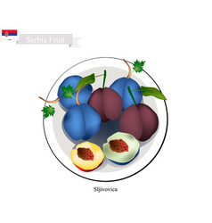 Plum one of the most popular fruit in serbia vector