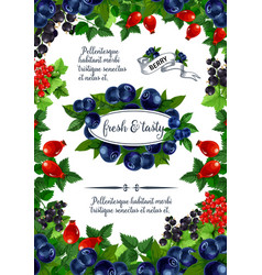 poster of fresh berries and fruits vector image