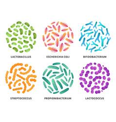 probiotics lactobacillus bifidobacterium vector image