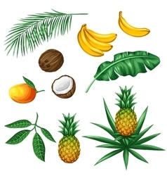 Set tropical fruits and leaves objects vector
