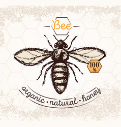 bee hand drawn on the textured background and vector image