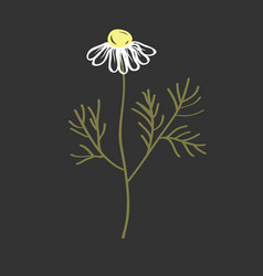 doodle chamomile flower hand drawn vector image