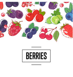 fresh berries retail vector image
