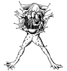 Frog autopsy vector