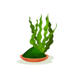 Green spirulina grass and plate with powder vector