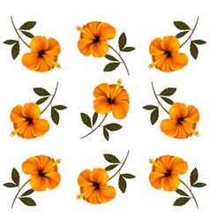 Pattern of beautiful yellow flowers vector image