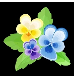 Pansies on Black Background vector image vector image