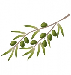 A branch of olive tree vector